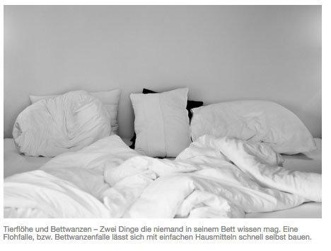 Bett bettwanzen