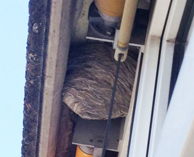 wespennest-im-Dach