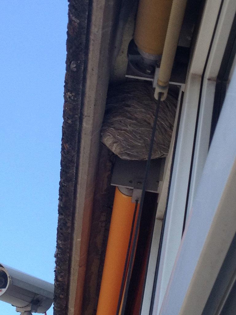 Wespenest-im-Dachueberstand