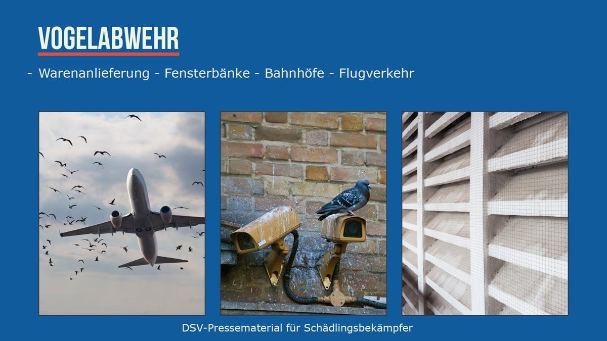Vogelabwehr- Warenanlieferung -Fensterbänke -bahnhöfe - Flugverkehr