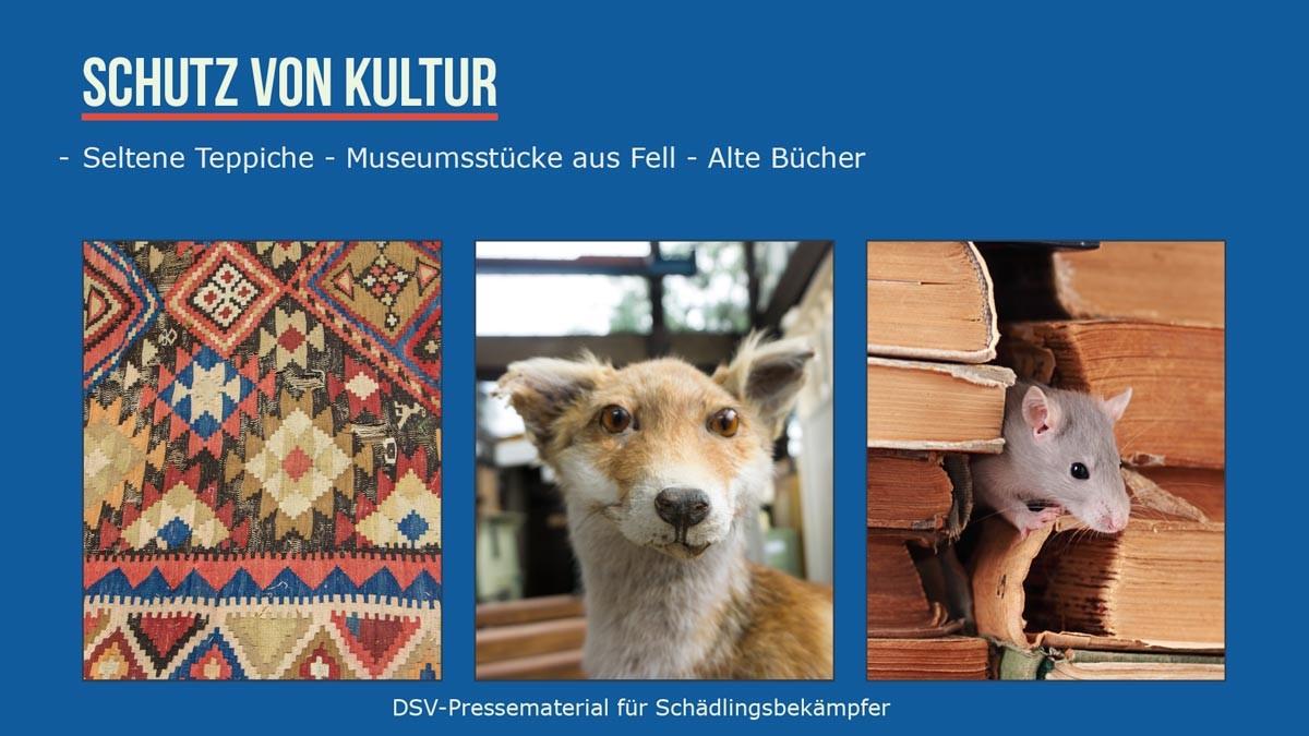 Kulturschutz -seltene Teppiche, Musemumsstücke aus Fell, alte Bücher