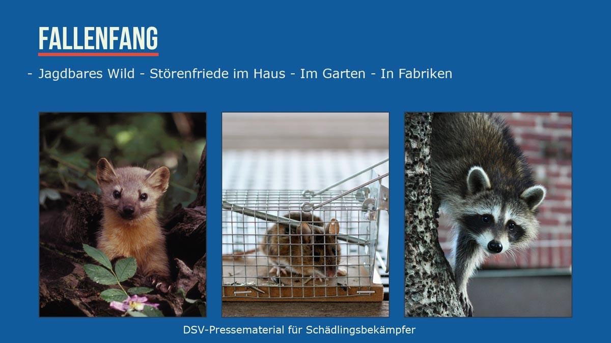 Fallenfang Jagdbares Wild - störenfriede im haus , Garten , in Fabriken