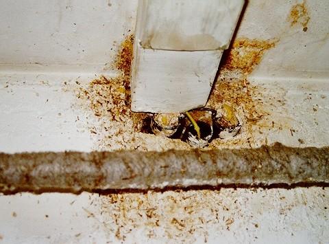Massenhaft abgesetzter Kot in einem Kellerraum
