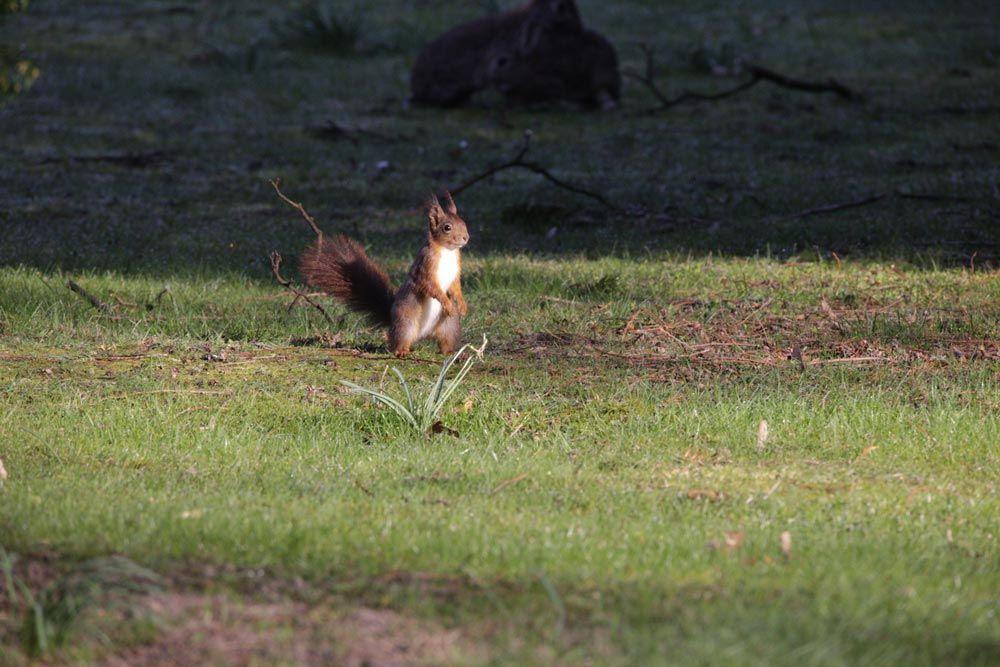 eichhörnchen in freier natur dank ökologische Schädlingsbekämpfung