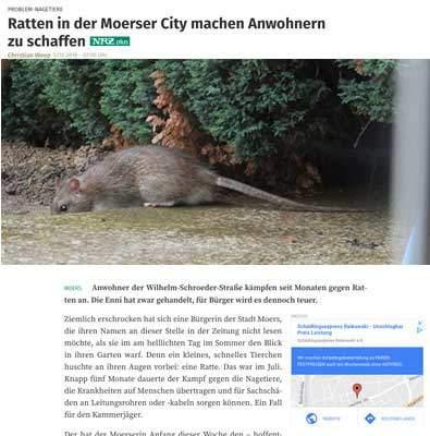 ratten in Moers